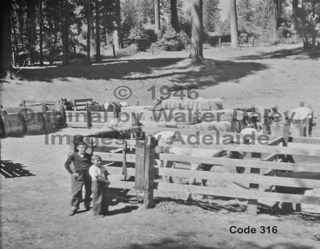 Old Pinecrest Corral