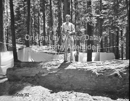 Photographer, Walter Daley in Pinecrest Campground