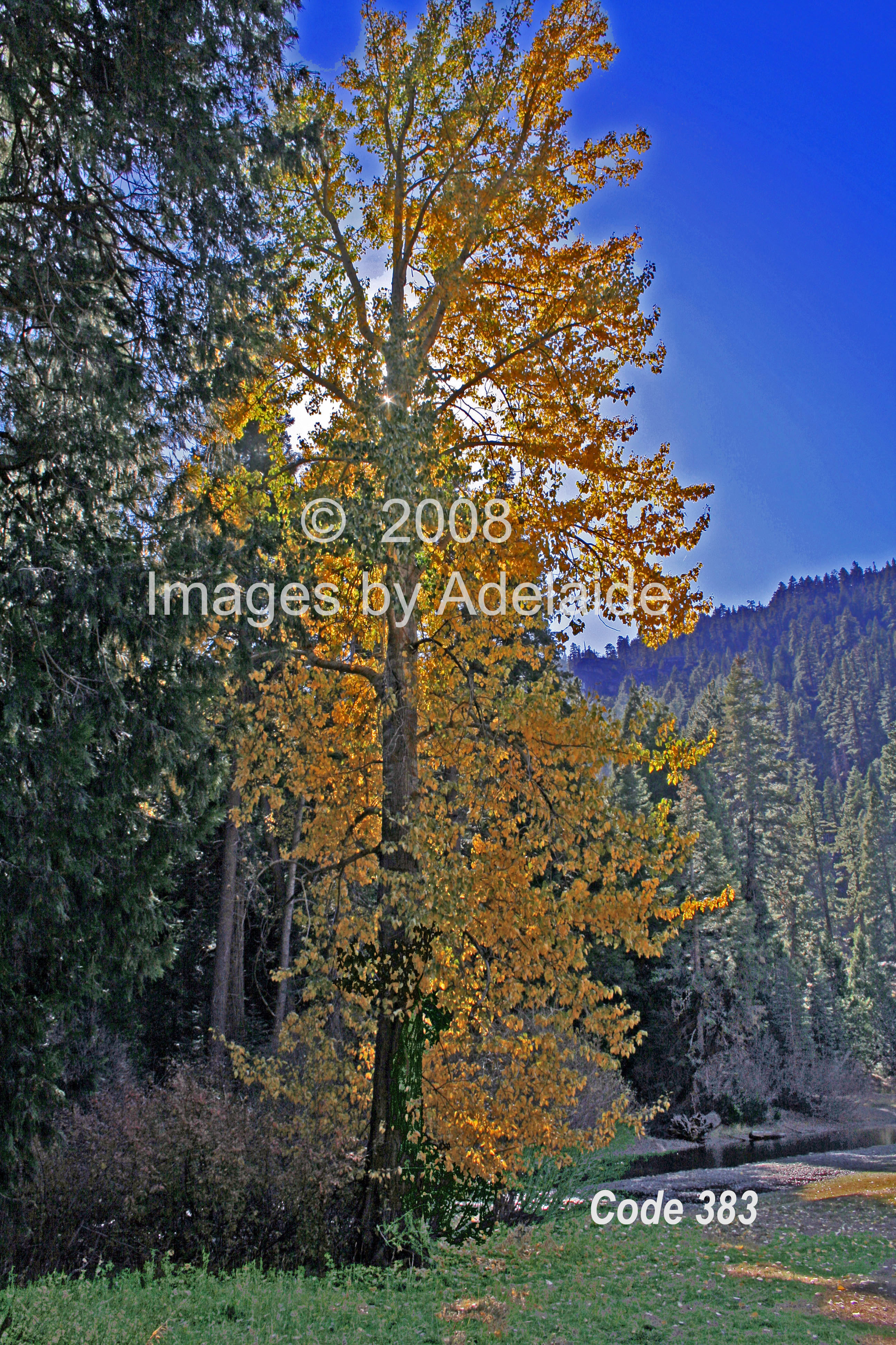 Code 382 bell meadow autumn color